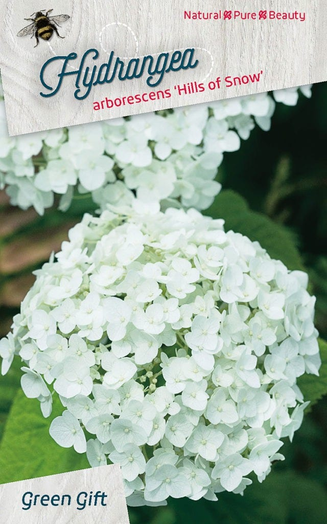 Hydrangea arborescens 'Hills of Snow'