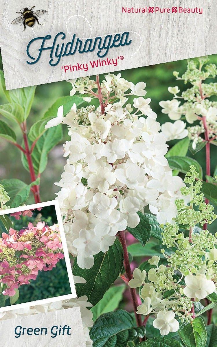 Hydrangea 'Pinky Winky' ®