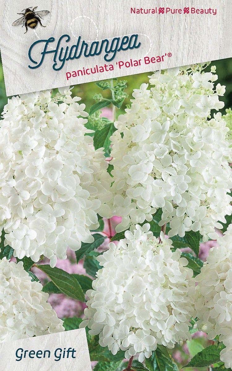 Hydrangea paniculata 'Polar Bear'(R)