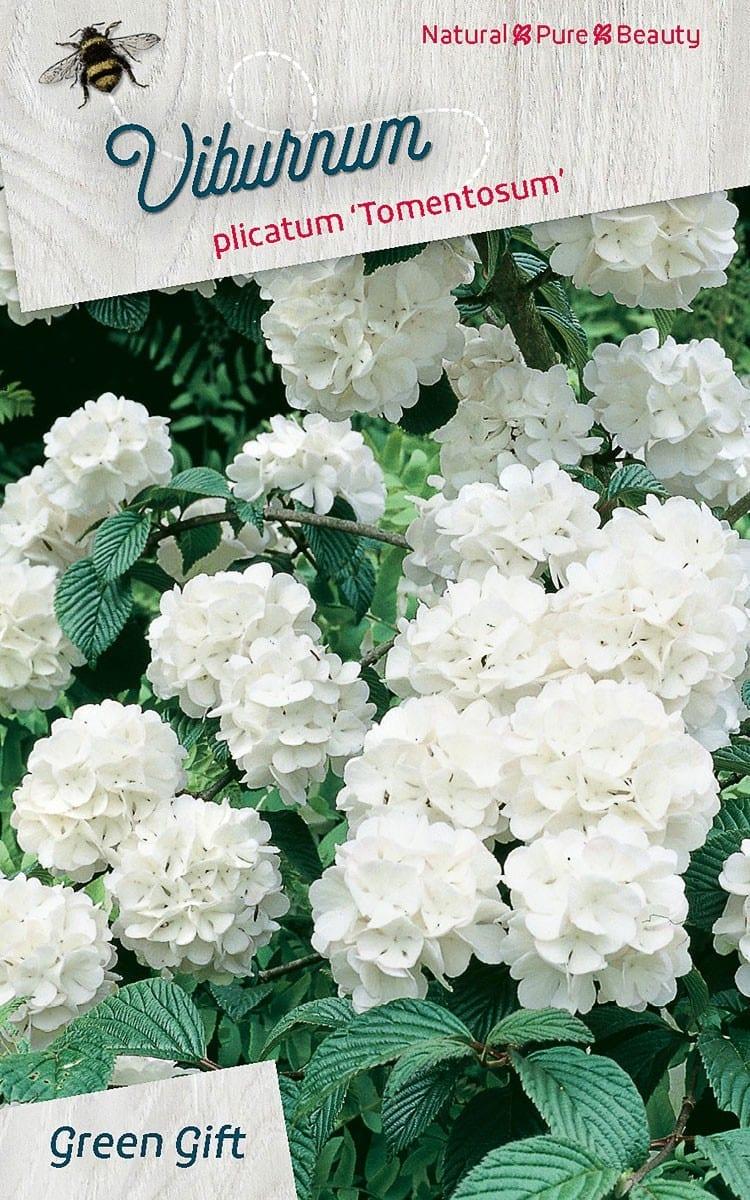 Viburnum plicatum 'Tomentosum'