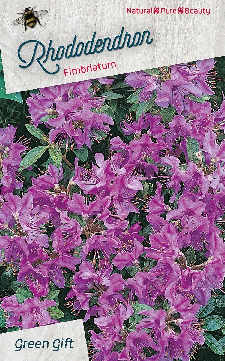 Rhododendron Fimbriatum