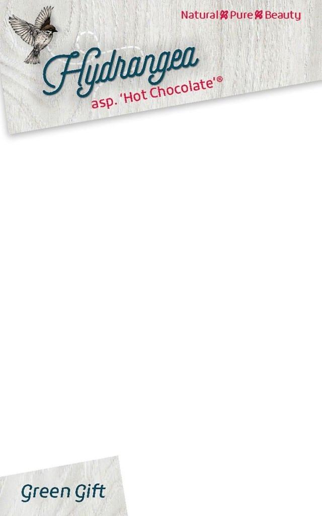 Hydrangea asp. 'Hot Chocolate'®