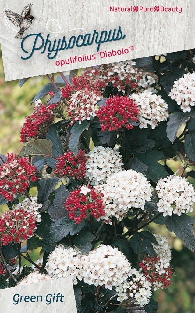 Physocarpus opulifolius 'Diabolo' ®