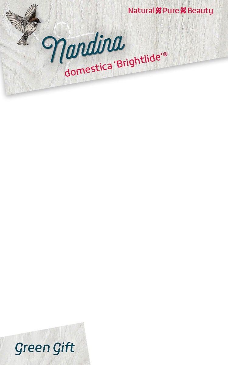 Nandina domestica 'Brightlide' ®
