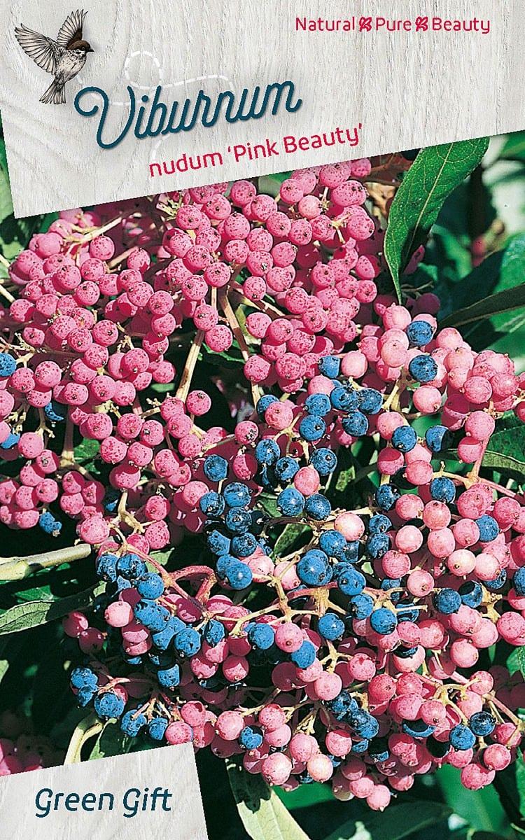 Viburnum nudum 'Pink Beauty'