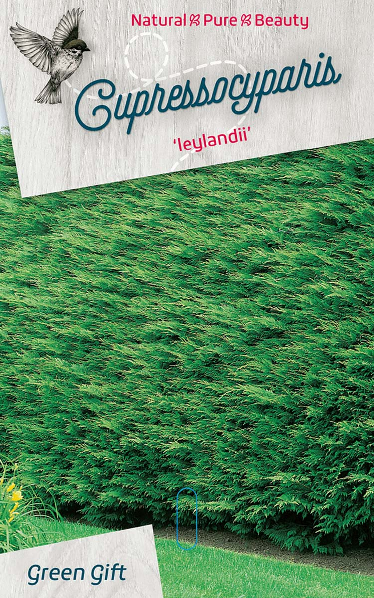 Cupressocyparis 'leylandii'