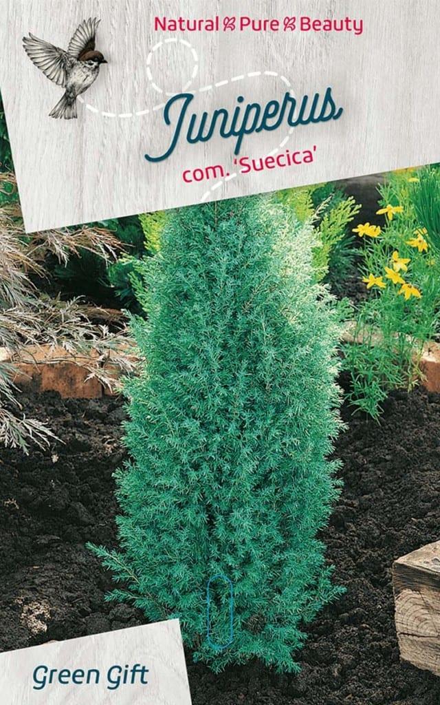 Juniperus com. 'Suecica'